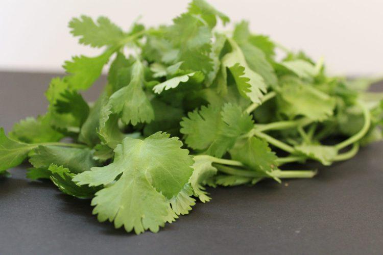 A photo of cilantro.
