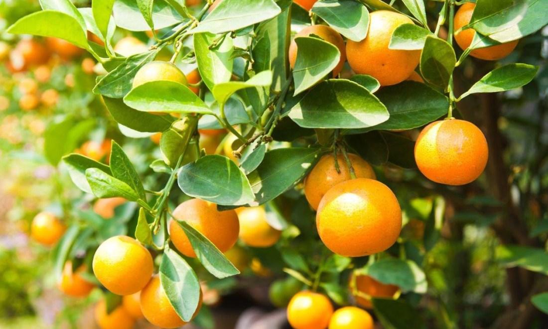 R100m investment saves SA citrus producer