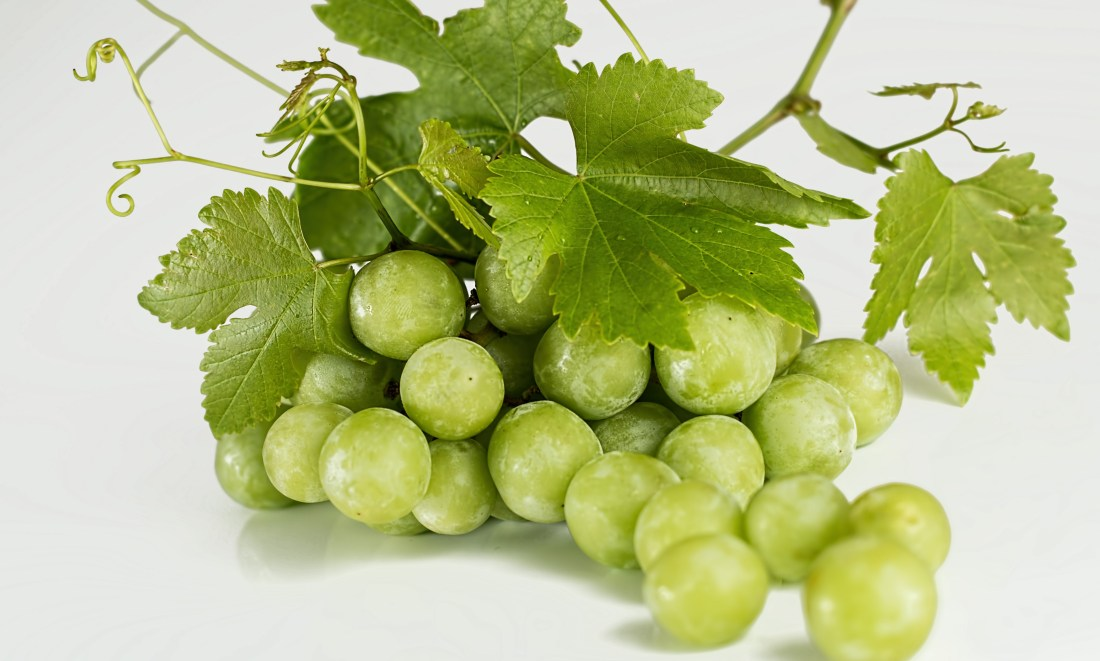 Rain hasn't caused grape disaster