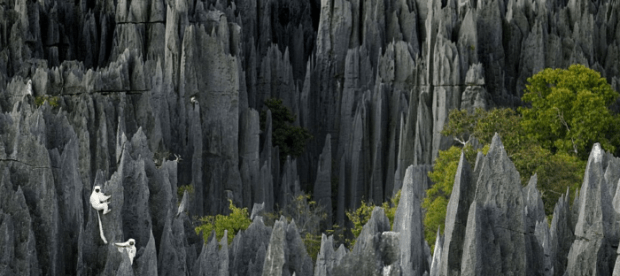 Tsingy the stone knife Forest Madagasca