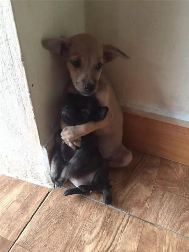 adopted-dogs-cuddle-buddhist-nuns-china-5ab