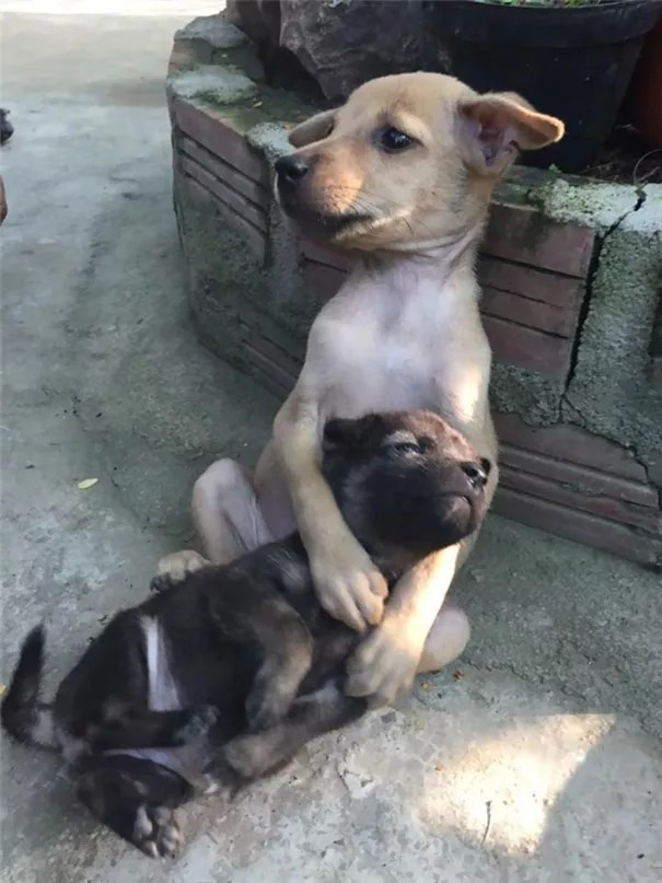 adopted-dogs-cuddle-buddhist-nuns-china-7