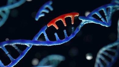 Photo of Studimi: Po dominon varianti i SARS-CoV-2 me mutacionin që shkakton përhapje më të lartë