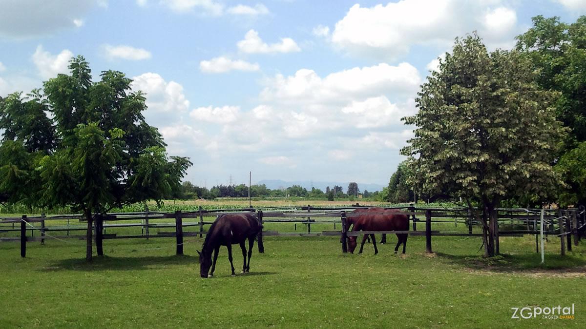 farma konja / lipanj 2013.