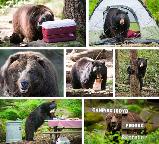 bear-camp-banner_l