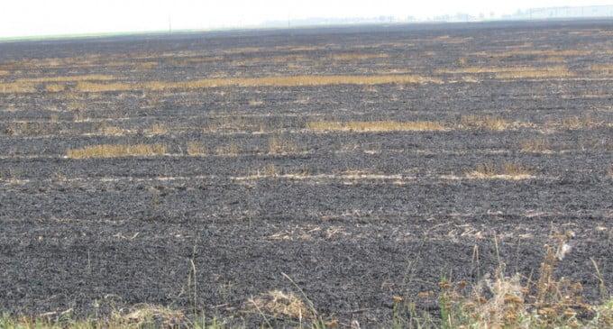 Incendii de vegetaţie uscată, în Roman și Valea Ursului