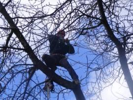 alpinist utilitar copaci arbori toaletare taiere