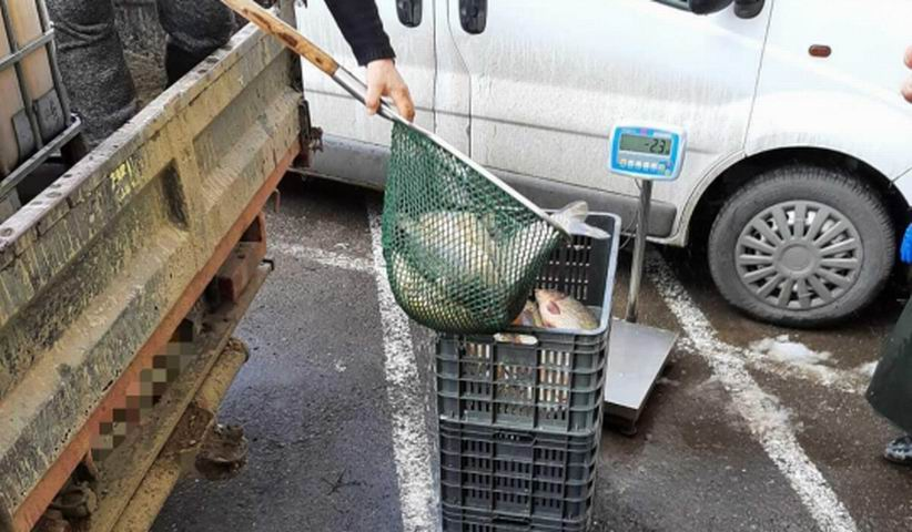 Pescari sancționați de polițiști. Au fost confiscate peste 180 de kilograme de pește