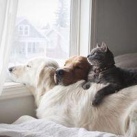 3 migliori amici: 2 cani e 1 gatto che amano fare tutto insieme
