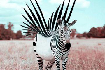 Artista francese usa Photoshop per creare animali fantastici e il risultato è sorprendente.