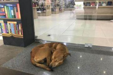 """Storie di cani E' subito virale il video di un cane randagio che  entra in una biblioteca e """"ruba"""" un libro e il titolo del libro è…."""