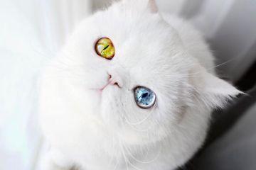 Pam Pam un gattino dallo sguardo davvero speciale