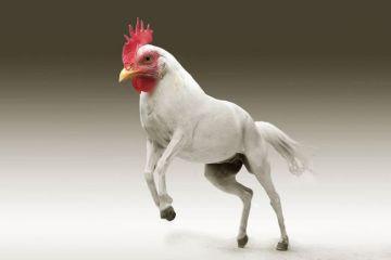 Fusioni di animali in Photoshop per creare animali ibridi