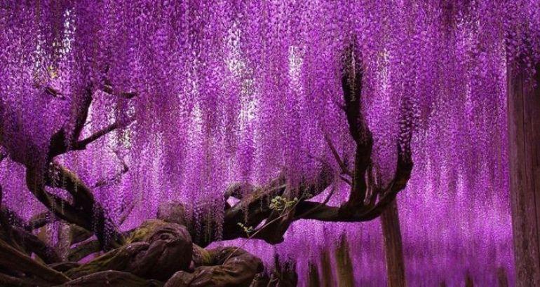 In ogni stagione gli alberi, così come i fiori, sono protagonisti dello spettacolo della natura che ci circonda e dalla quale anche noi facciamo parte. Con i loro colori, vivaci in primavera o tenui e malinconici in autunno, gli alberi, soprattutto se imponenti, non possono che attrarre la nostra attenzione e provocare emozioni.
