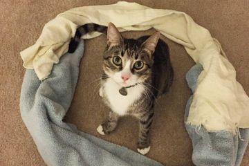 Perché i gatti entrano dentro i cerchi?