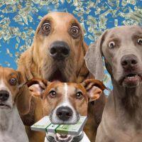 Le 10 razze di cani più rare