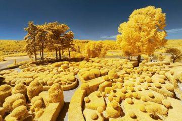 I paesaggi della Francia in giallo nelle fotografie di  Pierre-Louis Ferrer