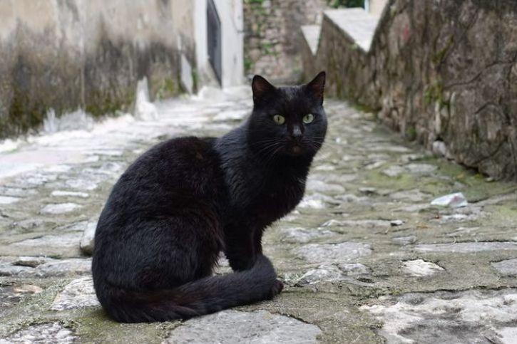 I gatti di Kotor