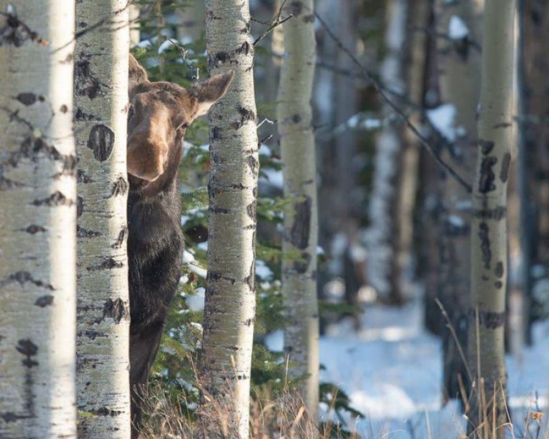 Le irresistibili foto dei finalisti del Comedy Wildlife Photography 2018
