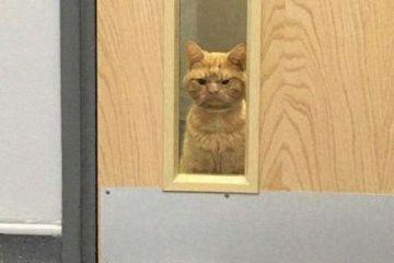 Si chiama Saul ed è il gatto dall'aspetto più imbronciato che mai