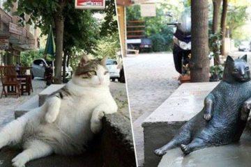 Un monumento al gatto Tombili il gatto più famoso di Istanbul