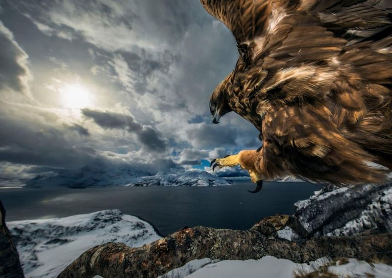 Wildlife Photographer of the Year 2019 audun-rikardsen