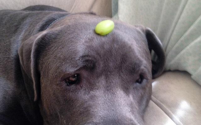 Alimenti pericolosi per il cane