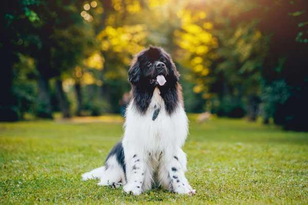 cane bianco e nero all'aperto-di-fronte-seduto