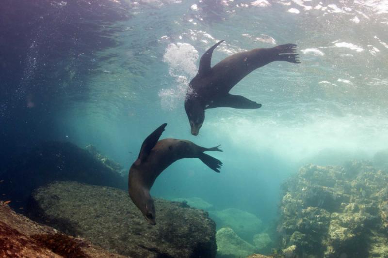 Galapagos Islands Wildlife Tour Amp Scuba Diving Tortoises