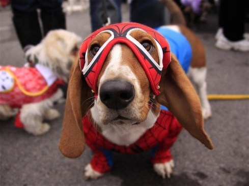 The amazing Spider Dog
