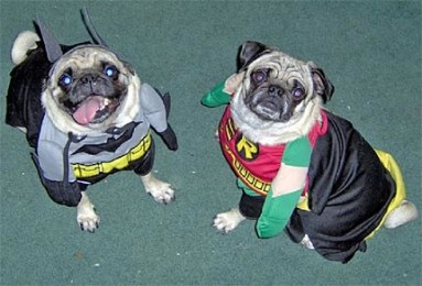 Bat Dog et Woufin