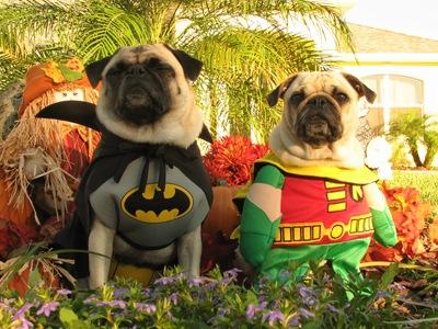 Bat Dog et Woufin