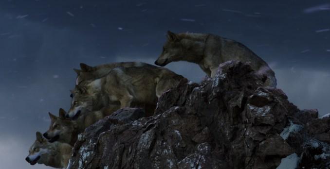 Le dernier loup Critique3