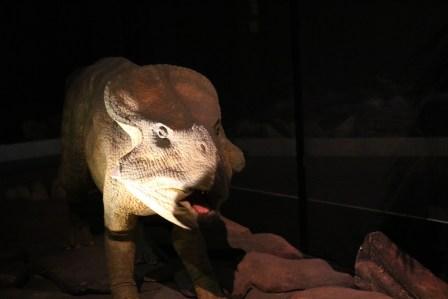 Expo autour des dinosaures4