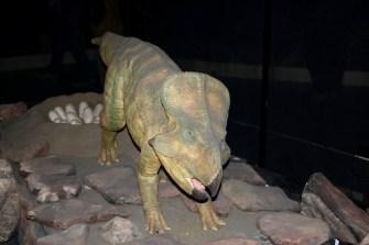 Expo autour des dinosaures6