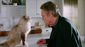 Ma vie de chat critique2