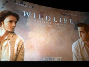 avant-premiere-wildlife-une-saison-ardente-01