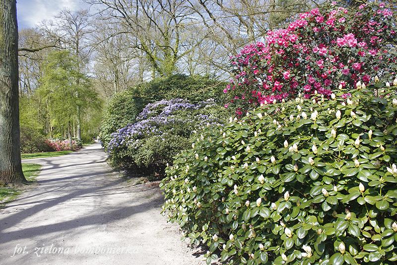 Rhododendron Park iOgród Botaniczny wBremie