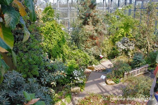 Botanika Brema Himalaya