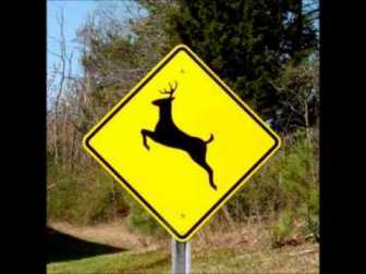 deer sign - From Deer To Bees, Motorcyclists Must Be Ready To React Wisely To Dangers, Says NY and PA Motorcycle Lawyer
