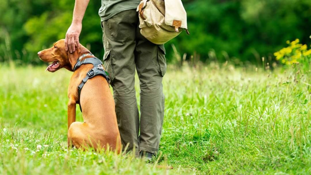 dog with owner - Dog Attacks - Binghamton NY