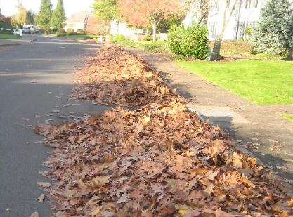 leaves - Danger Zones for Cyclists And Bikers: Keep Streets And Roads Clear Of Grass And Leaves, Says NY and PA Personal Injury Lawyer