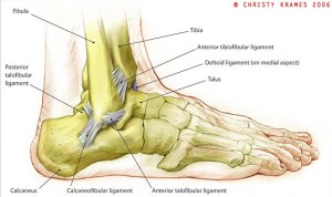 Dry Docked – Three Steps to Avoiding Ankle Injuries