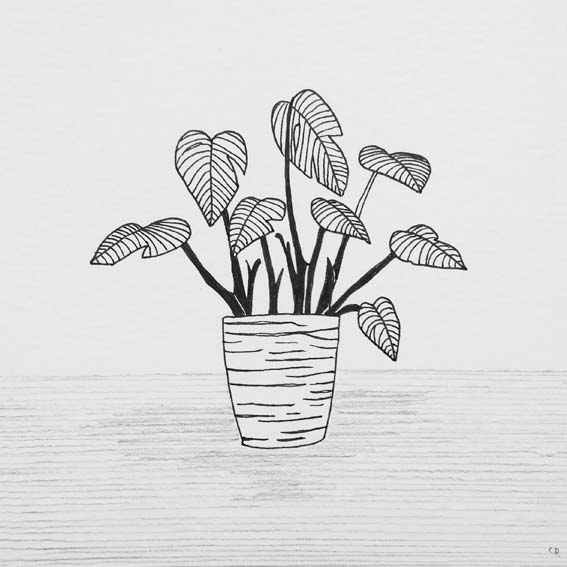 ILLUSTRATIE Plant Alocasia - Olifantsoor