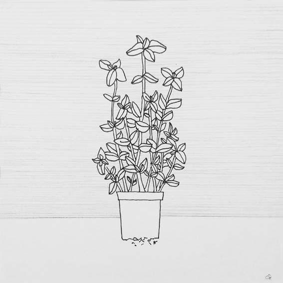 ILLUSTRATIE Plant Basilicum