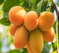 Photo of Man kills neighbour over mangoes