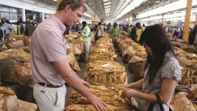 Photo of Contract tobacco  selling off on a high note at US$6.20 per kg