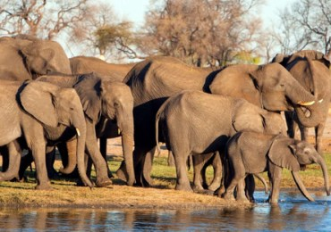 Drought-hit Zimbabwe to transfer thousands of animals