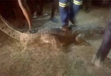 MYSTERIOUS CROCODILE TERRORIZES VILLAGERS