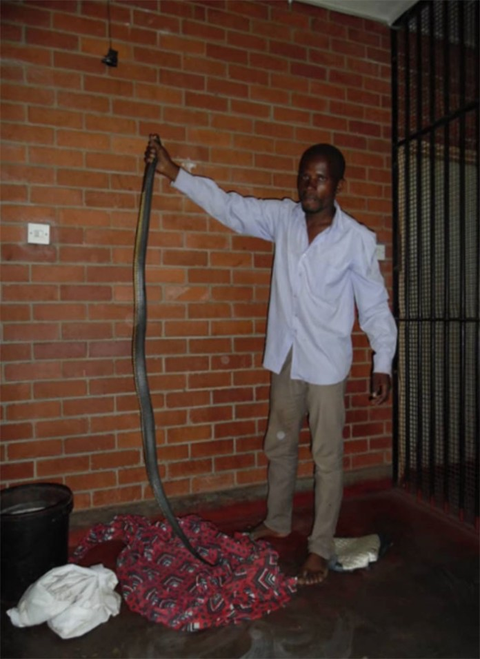 Robber caught with snake